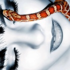 Обои beauty and snake